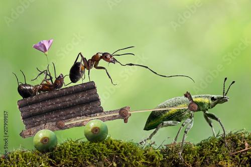 Foto Murales Two ants works