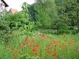 ... im Klostergarten