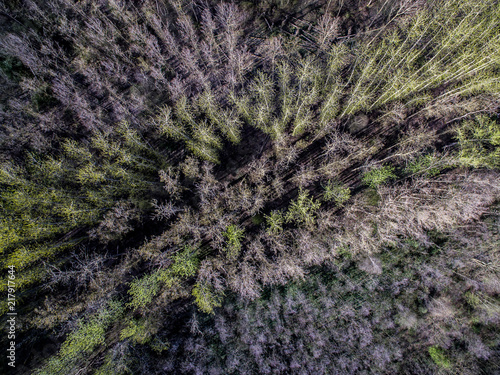 Foto Murales Dead trees from above