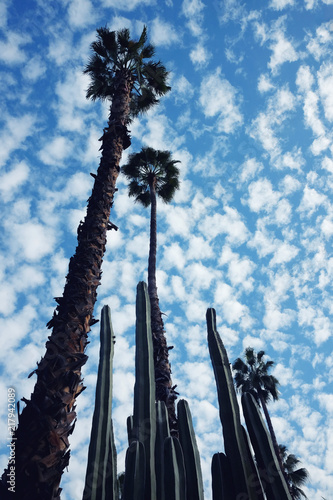 Tall palm trees and cactus plants against blue cloudy sky in the Majorelle garden in Marrakech, Morocco.
