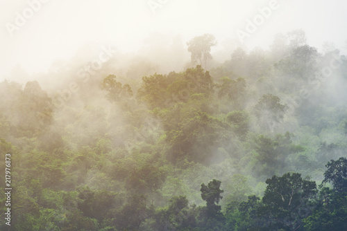 Asian tropical rainforest, nature view background - 217976873