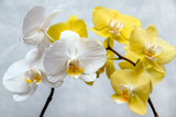 White and yellow orchids on white fabric background