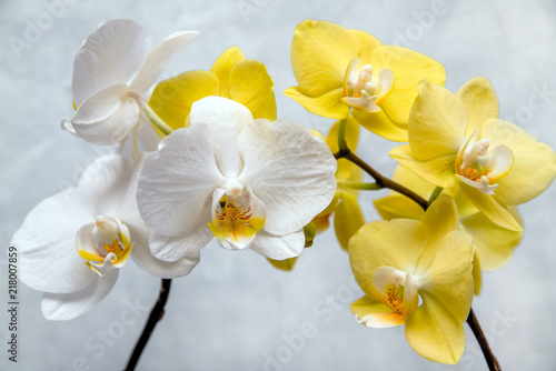Fototapeta White and yellow orchids on white fabric background