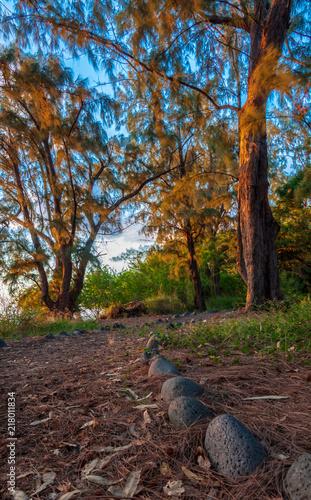 Fotobehang Weg in bos chemin dans la forêt