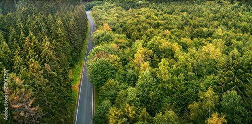Landstraße durch den Wald