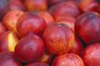 Red Nectarines - 218031650