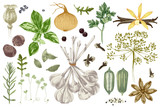 Hand drawn herbs and spices set - 218050891
