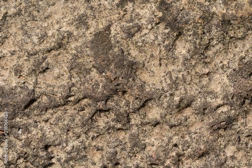 In de dag Stenen Old concrete wall outdoors