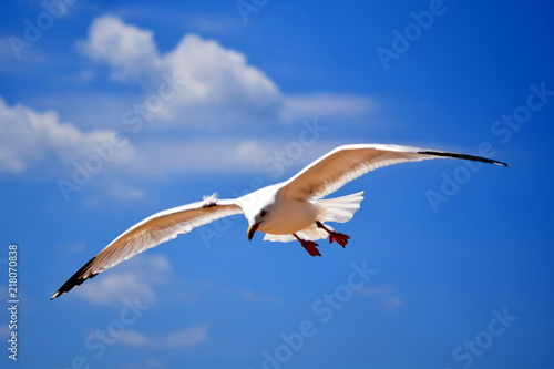 Foto Murales Seagull flying