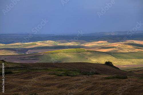 Canvas Zomer Summer fields