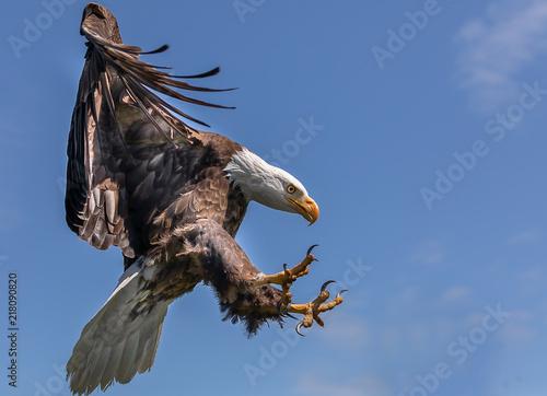 Foto Murales Bald Eagle Landing