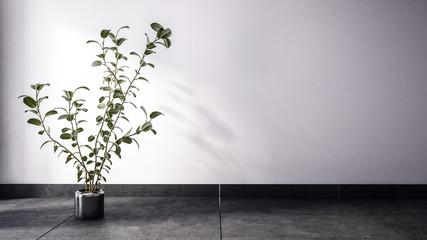 Large houseplant on dark floor