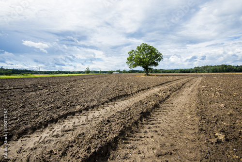 Canvas Zomer A view of the country agricultural field with a green tree in the background, cloudy summer day, Latvia