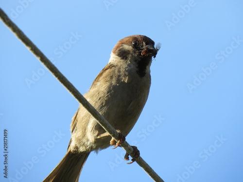 Foto Murales sparrow