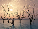 Dead trees standing in the water