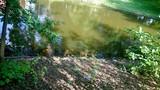 Le jardin des Plantes (Nantes)