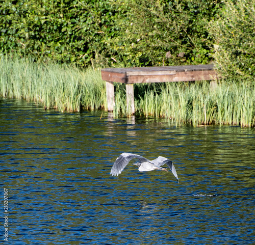 Aluminium Pier Gerey Heron flying