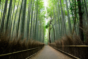 Bamboo forest walkway with film vintage style
