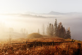 Amazing scene on autumn mountains. Yellow and orange trees in fantastic morning sunlight. Carpathians, Europe. Landscape photography - 218230217