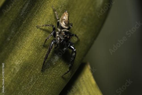 Foto Murales Hairy Spider