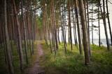 Nadmorski las sosnowy