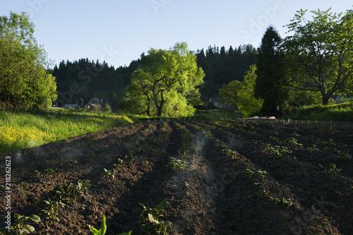 Fotobehang Weg in bos drzewo na polu