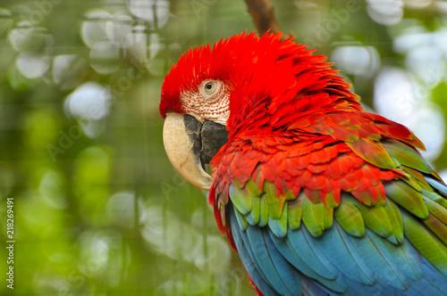 Aluminium Papegaai Macaw parrot