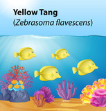 Yellow tang under deep ocean