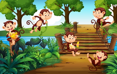 A group of monkey  at the park © GraphicsRF