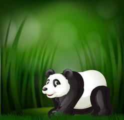A panda on green blur background