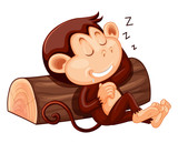 A monkey sleeping on white background - 218317006