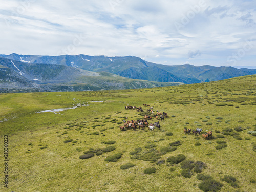 A herd of horses in the pasture. Altai landscape