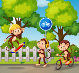 A group of monkey and extreme sport - 218363045