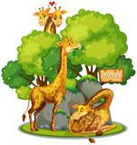 Giraffe in the zoo - 218363098