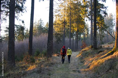 Fotobehang Weg in bos Couple effectuant une randonnée en forêt en fin de journée
