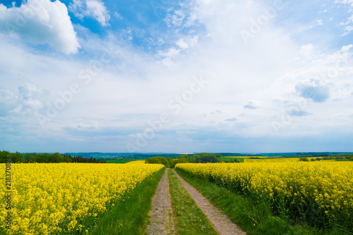 Canvas Blauwe hemel Pasture view of a road and rapeseed fields