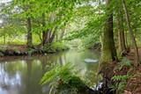 Fairytale river landscape, the river Luhe at Wohlenbüttel, Lüneburg Heath. Northern Germany - 218381270