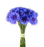 Blue cornflower bouquet isolated on white background