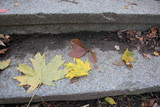 Granite steps covered with colorful autumn leaves