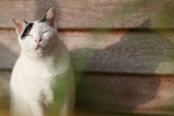 cute black and white cat sitting on a wooden terrace.Outdoor life of domestic cat.