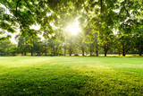 Beautiful landscape in park with tree and green grass field at morning. - 218496887