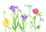 watercolor silhouettes of wild flowers
