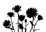 vector silhouettes of wild flowers