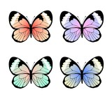 Collection of exotic colorful butterflies, vector illustration