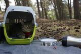 Kot na spacerze w warszawskim lesie w Polsce