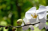 Beautiful white and yellow tropical orchid flowers in the garden with bokeh nature background.