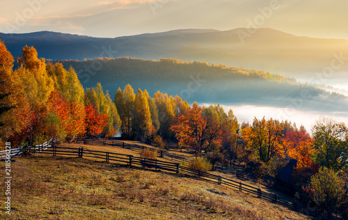 rural field and orchard in autumn at sunrise. mountainous countryside with fog in distant wally - 218566228