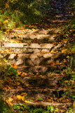 Stone stairs with autumn leaves
