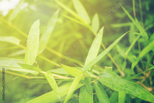 Green leaf soft focus with closeup in nature view © Mingman Srilakorn