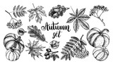 Ink hand drawn set of autumn leaves, rowan berries, ripe pumpkins, acorns. Autumn elements collection with brush calligraphy style lettering. Vector illustration. - 218668012